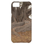 20130615_cal13_0249.jpg case for iPhone 5C