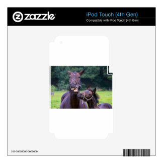 20130923-Talking horse with foal.jpg Decals For iPod Touch 4G