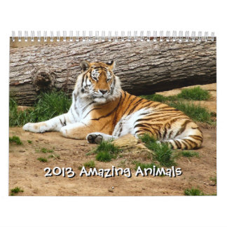 2013 Amazing Animals Wild Animal 12 Month Calendar