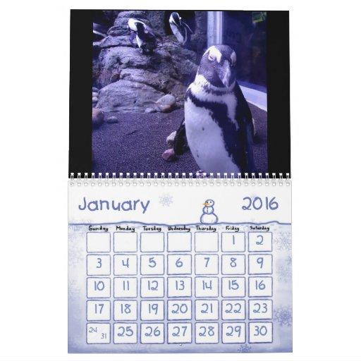 2013 Aquarium Life Calendar