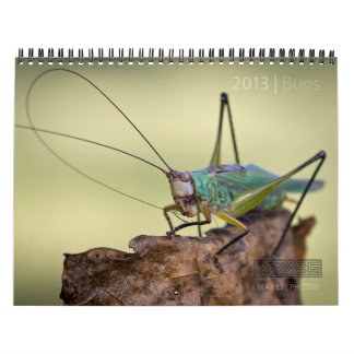 "2013 BUGS ""SPECIAL"" CALENDAR BY MAYES 