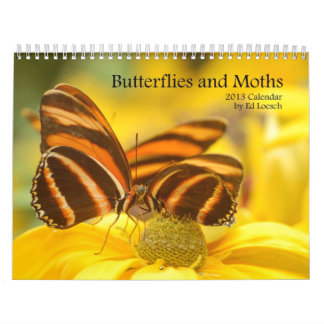2013 Calendar - Butterflies and Moths