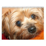 2013 Calendar of Fun Images of Terrier Dog