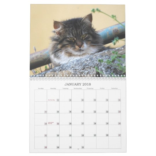 2014 Cat Calendar