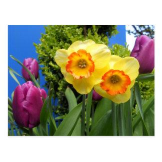 2014Daffodil & Tulip01 Postcard
