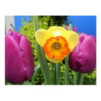 2014Daffodil & Tulip05 Postcard
