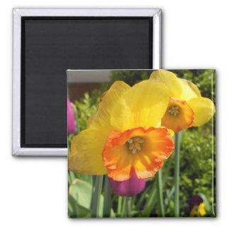 2014Daffodil & Tulip07 Magnet
