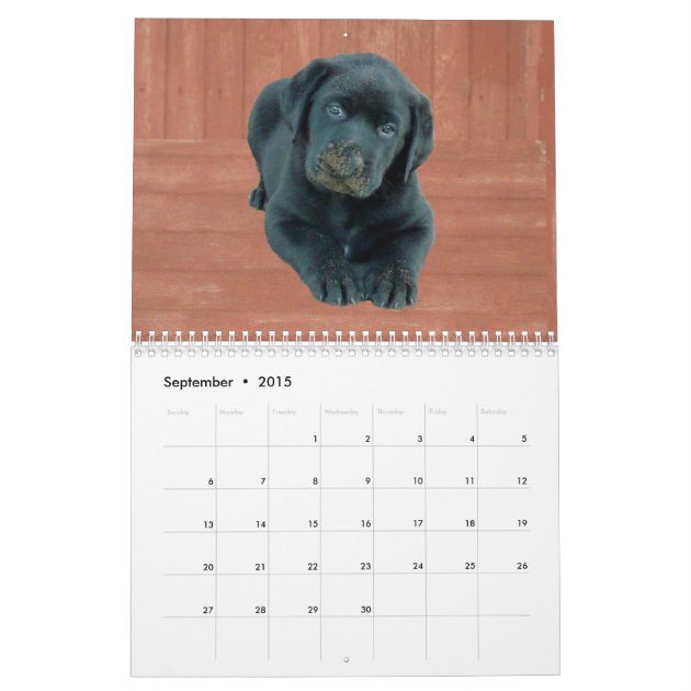 2015 Mastador Puppies Calendar | Zazzle