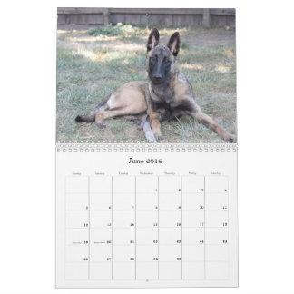 2016 Belgian Malinois Calendar