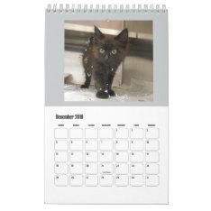 2016 Black Cats Calendar at Zazzle