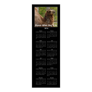 2016 Calendar Guess What Day It Is Camel Funny Poster