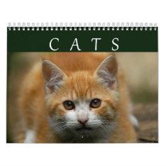 2016 Cat Calendar at Zazzle