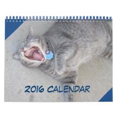 2016 Cat & Dog Calendar at Zazzle