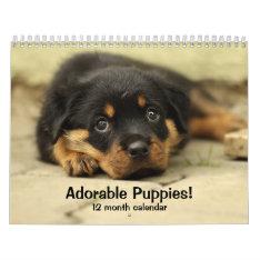 2017 Adorable Puppies Twelve Month Dog Calendar at Zazzle