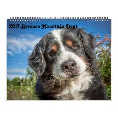 2017 Bernese Mountain Dogs Calendar at Zazzle