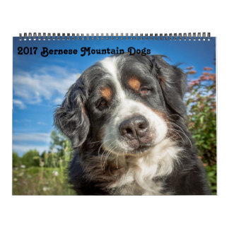 2017 Bernese Mountain Dogs Calendar