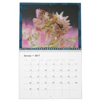 2017 Medium/Large MANTIDFORUM Calendar