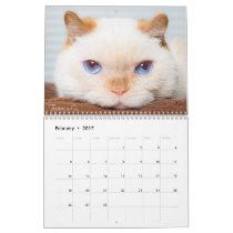 2017 Trident the Cat Calendar