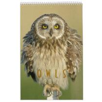 2017 Wall Calendar for Owl Lovers