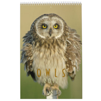 2017 Wall Calendar for Owl Lovers