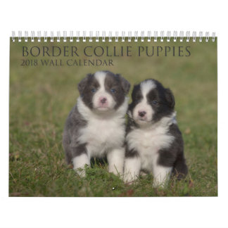 2018 Border Collie Puppies wall calendar