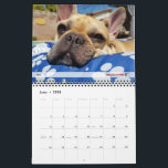 "2018 FBRN French Bulldog Calendar<br><div class=""desc"">Enjoy twelve months of French Bulldogs with our very special calendar featuring foster Frenchies and grads from FBRN! Learn more about the French Bulldogs in need at frenchbulldogrescue.org.</div>"