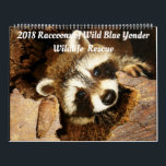 "2018 Raccoons of Wild Blue Yonder Wildlife Rescue Calendar<br><div class=""desc"">Raccoon fosters passing through on their way back to the wilderness. I am blessed to meet each and every one of them; each with distinct personalities and  curiosity .</div>"