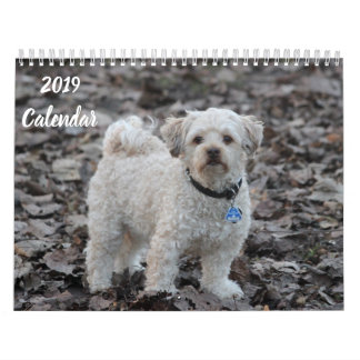 2019 Calendar Cute Poodle Dog Images