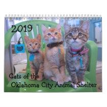 2019 Cats of the Oklahoma City Animal Shelter Calendar