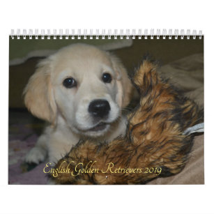 Golden Retriever Puppies Office