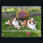 "2020 MINNESOTA SHELTIE RESCUE CALENDAR<br><div class=""desc"">The annual Minnesota Sheltie Calendar,  featuring past adoptees and friends of Minnesota Sheltie Rescue</div>"