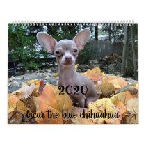 2020 Oscar the blue chihuahua calendar