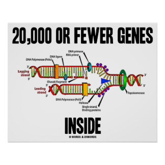 20 000 Or Fewer Genes Inside DNA Replication Posters