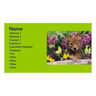 20_baby_animals (15) adorable cute darling pets business card