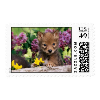 20_baby_animals (15) adorable cute darling pets postage