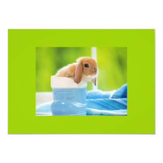 20_baby_animals (4) BABY BUNNY RABBIT blue greens Card