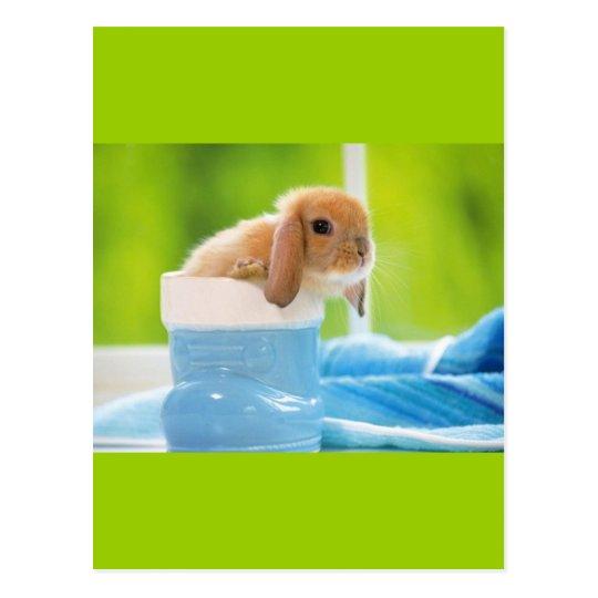 20_baby_animals (4) BABY BUNNY RABBIT blue greens Postcard