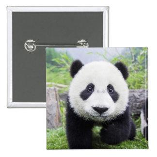 20_baby_animals (9) CUTE PANDA CUB WILD ANIMALS Buttons