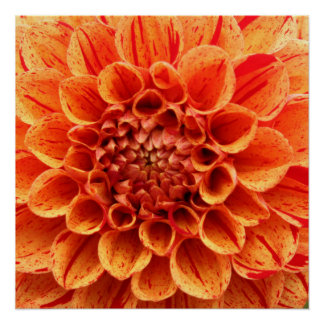 "20""x20"", Poster Paper (Semi-Gloss) Orange Flower"