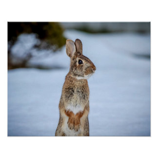20x16 Rabbit in the snow Poster