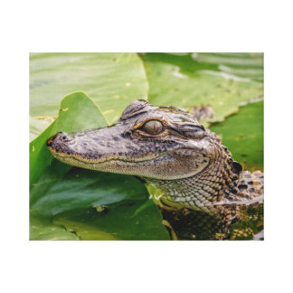 20x16 Young Alligator Canvas Print
