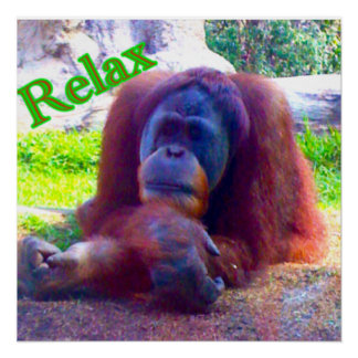 "20x20 semi-gloss poster of orangutan and ""Relax"""