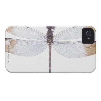 23640349 iPhone 4 COVER