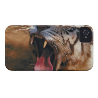 23899234 iPhone 4 COVER