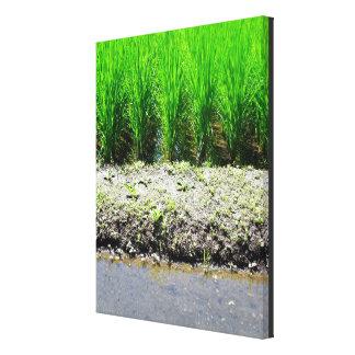 "23.75"" x 29.75 x 1.5"" List Price: $250  SAVE ($25) Canvas Print"