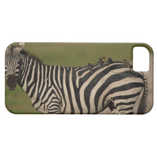 24109277 FUNDA PARA iPhone 5 BARELY THERE