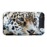 24114363 iPhone 3 Case-Mate PROTECTORES