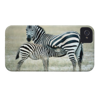 24114480 iPhone 4 COVER