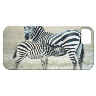 24114480 iPhone 5 COVER