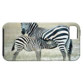 24114480 iPhone 5 COVERS